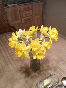 Daffodils from the neighbor